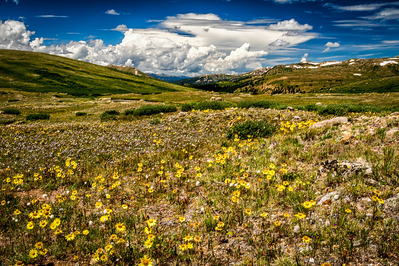 Independence Pass and wildflowers