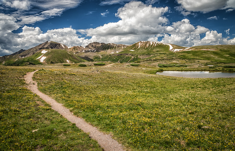 Independence Pass, Wildflowers and the Continental Divide