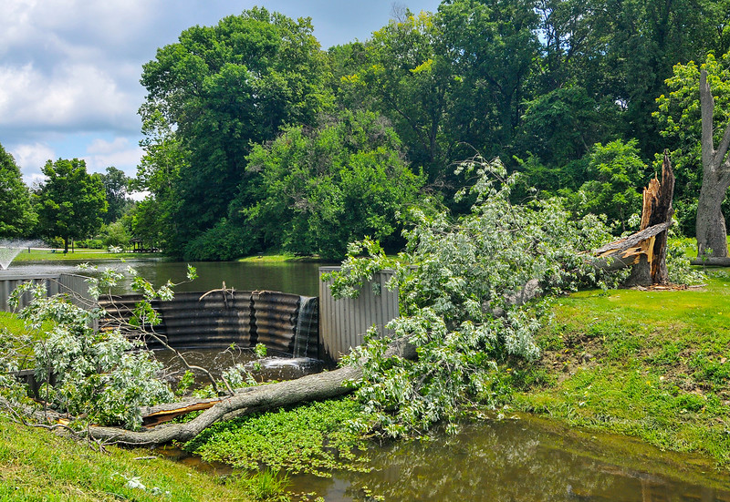 MET 071416 DEMING TREE DOWN