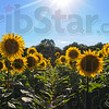 MET 071716 FLOWERS SUNSET