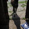 MET062416lkochdonkey