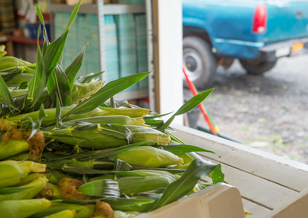 JOED VIERA/STAFF PHOTOGRAPHER- Lockport, NY-Freshly picked corn stocks the shelves at Hillers Farms.