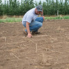 JOED VIERA/STAFF PHOTOGRAPHER- Lockport, NY-Jeff Hiller goes through an irregular patch of soil that wasn't irrigated at Hiller's Farm.