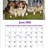 Calendar June 2016