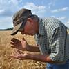MET062316 koch wheat test