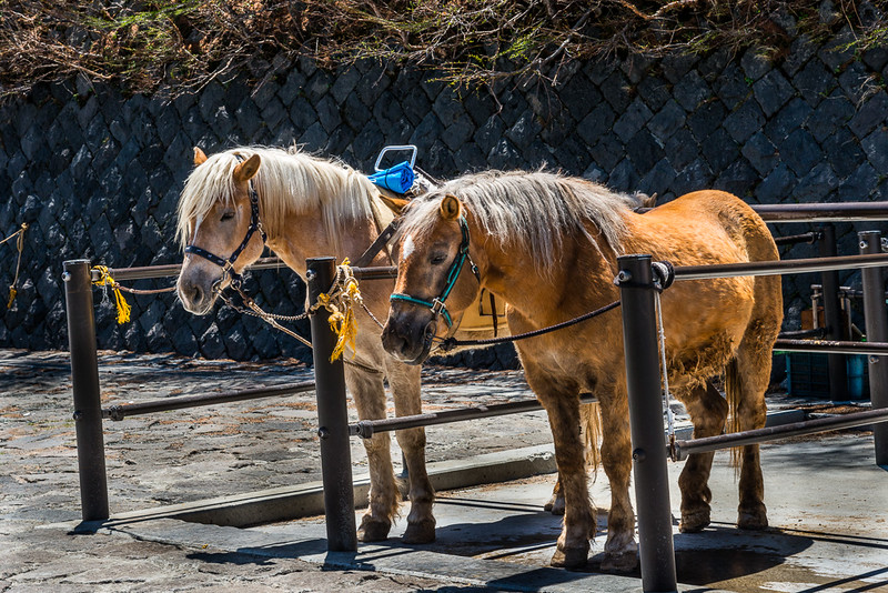 Mt Fuji - 5th station horses