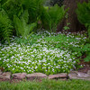 JOED VIERA/STAFF PHOTOGRAPHER-Lockport, NY-A flower bed blooms in front of Jayette Sinclair's home on Rydalmount Road.