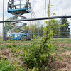 JOED VIERA/STAFF PHOTOGRAPHER-Wrights Corners, NY-Workers set up vines for hop bines at Vertical Vines.