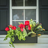 JOED VIERA/STAFF PHOTOGRAPHER-Lockport, NY-Flowers bloom outside the garden shed behind the Kenan House.
