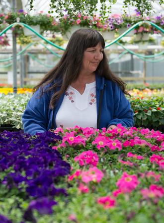 JOED VIERA/STAFF PHOTOGRAPHER-Newfane, NY-Deborah Woolley organizes Pipiles flowers.