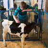 JOED VIERA/STAFF PHOTOGRAPHER-Barker, NY-Bryce Broeker pets a calf during an agriculture fair.