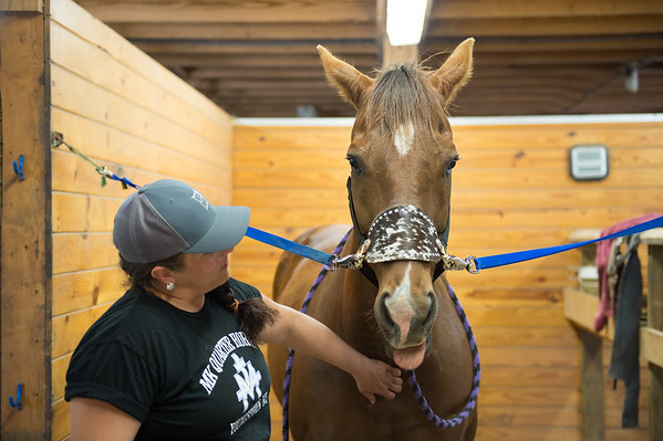 JOED VIERA/STAFF PHOTOGRAPHER-Wilson, NY-Melissa Koser grooms Hemi in a stable at MK Quarter Horses.