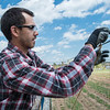 JOED VIERA/STAFF PHOTOGRAPHER-Wrights Corners, NY-Brian Ranny sets  up vines for hop bines at Vertical Vines.