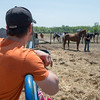 JOED VIERA/STAFF PHOTOGRAPHER-Wilson, NY-Rob Szczepanski watches over horses at MK Quarter Horses.
