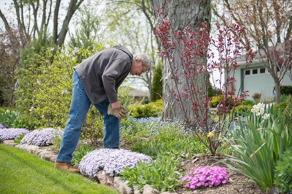 JOED VIERA/STAFF PHOTOGRAPHER-Pendleton, NY- Tom Homme works on his garden.