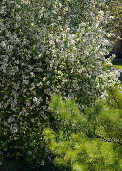 Palatine Spring 04