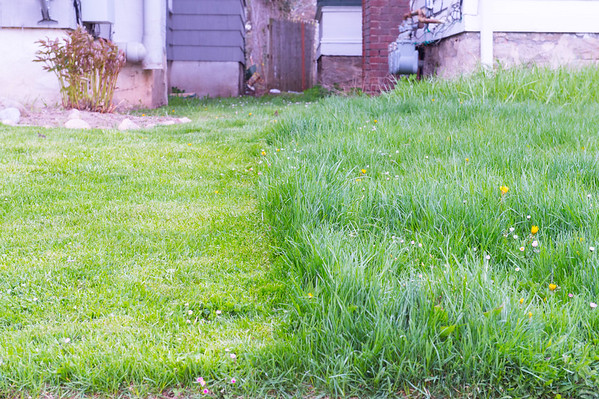 JOED VIERA/STAFF PHOTOGRAPHER- Lockport, NY-Uncut grass divides the property line of two High Street homes.