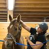 JOED VIERA/STAFF PHOTOGRAPHER-Wilson, NY-Melissa Koser grooms Hemi in a stable at MK Quarter Horses.