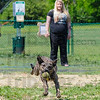 MET 052216 HARLEY FETCH