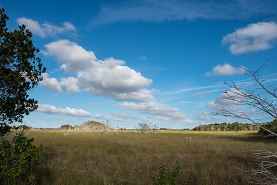 Everglade grass land.  This was walkable.  The grass that the airboats go through is outside the national park.