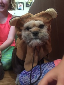 Daisy the Ewok