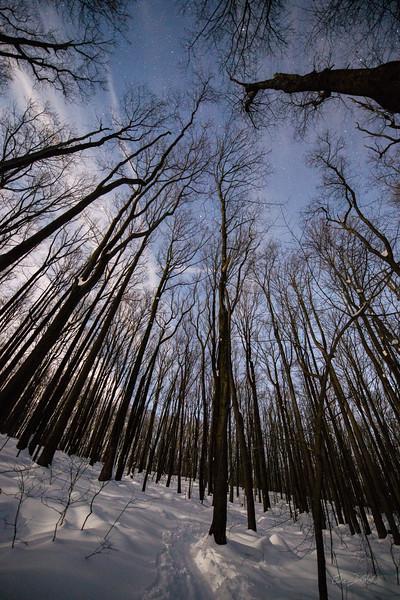 Coopers-Rocks-WV-Skiing-Winter-Storm-Jonas-12