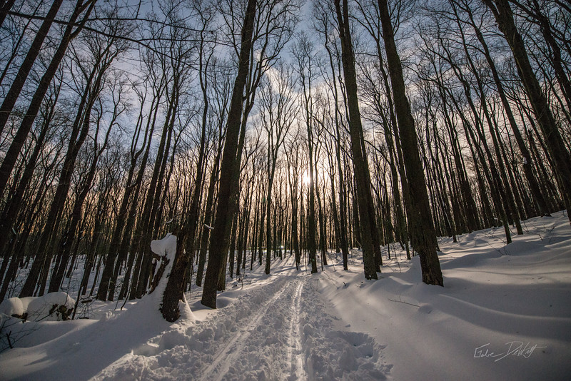 Coopers-Rocks-WV-Skiing-Winter-Storm-Jonas-15