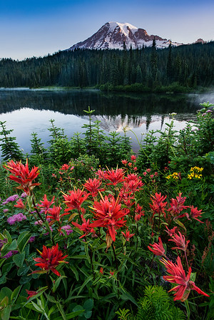 Willie and I arrived at Reflection Lake and searched high and low for flowers facing Mt. Rainier. We found 2 patches but this was the better patch since it had some Indian Paintbrush (the only Paintbrush we could find). Of course Willie plops down first and claims the spot as his, so I had to go off and find something else to photograph. Eventually we swapped!