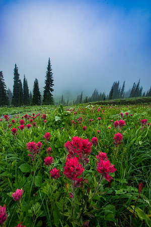 Mt. Rainier was covered in fog when we arrived on our first morning. There was a period of 5 minutes where Rainier peeked out from the fog and we raced to this field to capture it with the Indian Paintbrush. And just like THAT, it was gone again!