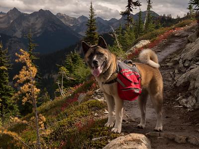 North Cascades Akita