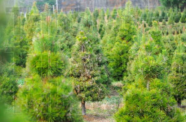 MET 112716 TREES