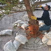 MET111816 tree durham
