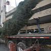MET111816 tree lift
