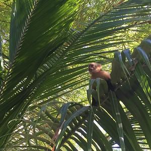 Spider Monkey Sighting! - Bridget St. Clair