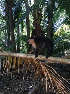 Monkey Business in Curu - Bridget St. Clair
