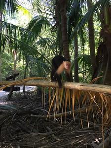 Spider Monkey Crawl - Bridget St. Clair