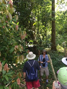 Rainforest Trek - Bridget St. Clair