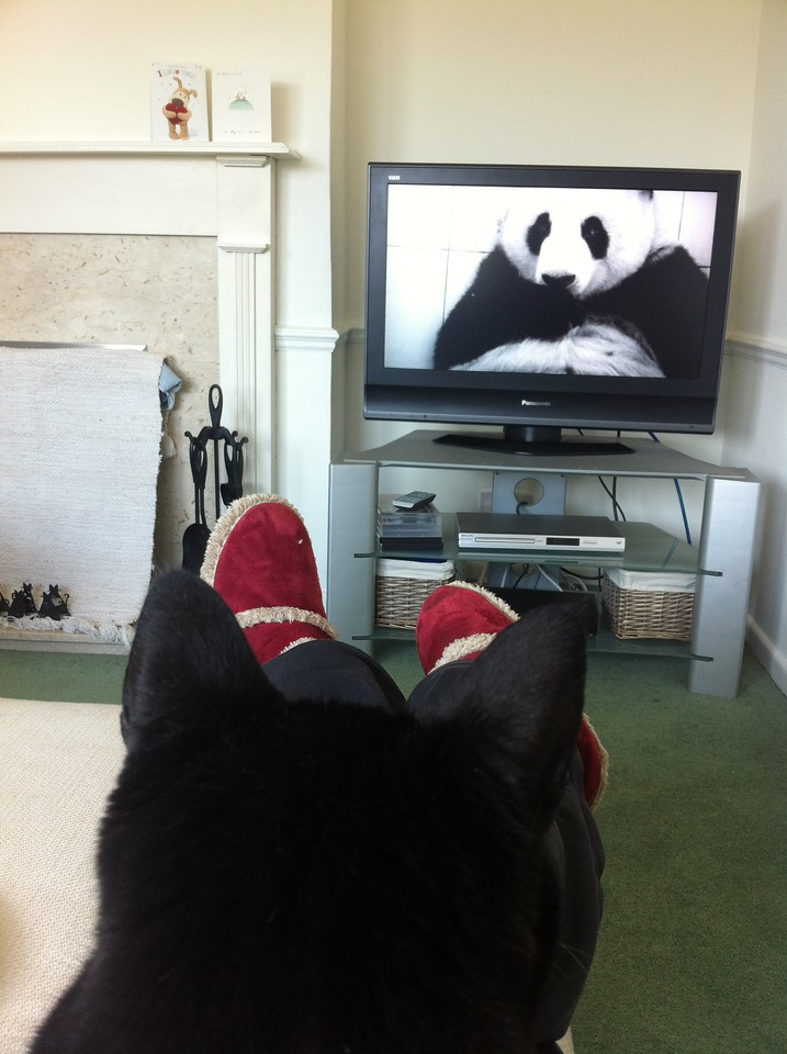Marley watches tv