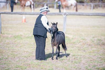 Pinjarra Equestrian Assoc. All Breed Spectacular