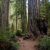 Boy Scout Tree trail