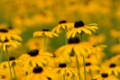 summerflowers-17