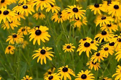 summerflowers-15
