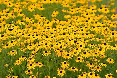 summerflowers-11