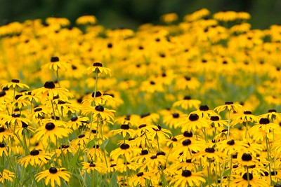 summerflowers-13