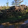LOGS PILED AT DOUG'S PLACE...FIREWOOD FOR SALE......