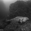 El Gordito!!   The harbor seal appeared well fed.  Lover's Reef