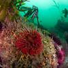 Invertebrate life everywhere!  Lover's reef