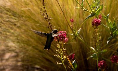 Santa Fe The Birds