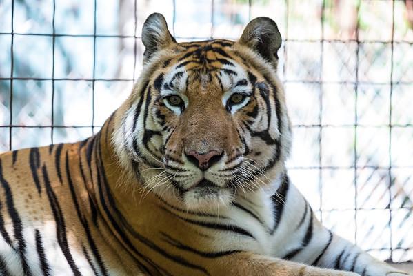 Exotic Feline Rescue Center & Cloverdale