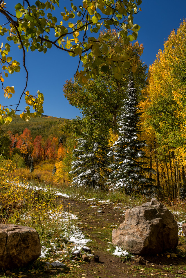 Colorado Fall Colors